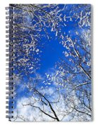 Winter Trees And Blue Sky Spiral Notebook
