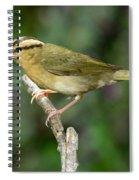 Worm-eating Warbler Spiral Notebook