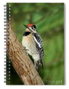 Yellow-bellied Sapsucker Spiral Notebook