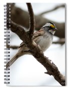 Yellow Crowned Sparrow Spiral Notebook