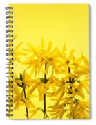 Yellow Forsythia Flowers Spiral Notebook