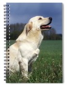 Yellow Labrador Spiral Notebook