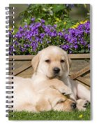 Yellow Labrador Puppies Spiral Notebook