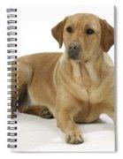 Yellow Labrador Retriever Spiral Notebook