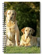 Yellow Labrador Retrievers Spiral Notebook