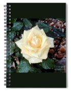 Yellow Rose At Dawn Spiral Notebook