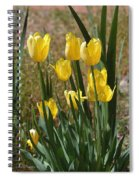 Yellow Tulips At The Arboretum Spiral Notebook