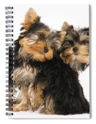 Yorkie Puppies Spiral Notebook