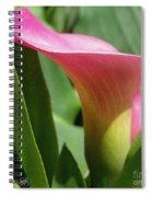 Zantedeschia Named Majestic Red Spiral Notebook
