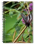 Zebra Swallowtail Butterfly At Butterfly Bush Spiral Notebook