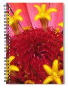 Zinnia Named Swizzle Scarlet And Yellow Spiral Notebook