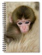 Baby Snow Monkey, Japan Spiral Notebook