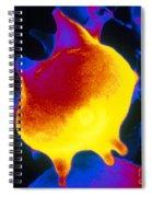 Red Blood Cell, Sem Spiral Notebook