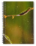 Red-eyed Tree Frog Spiral Notebook