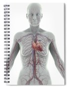The Cardiovascular System Female Spiral Notebook
