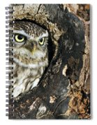 100205p258 Spiral Notebook