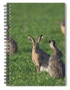 101130p212 Spiral Notebook