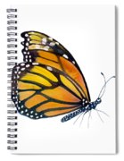 103 Perched Monarch Butterfly Spiral Notebook