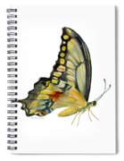 104 Perched Swallowtail Butterfly Spiral Notebook