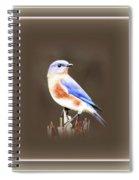 104101-024 Spiral Notebook