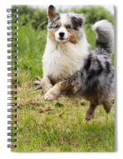 Australian Shepherd Dog Spiral Notebook