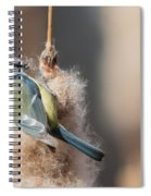 Blue Tit Spiral Notebook