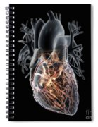 Coronary Blood Supply Spiral Notebook