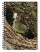 Immature Hooded Merganser Spiral Notebook