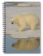 Polar Bear Walking On Ice Spiral Notebook