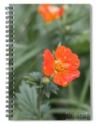 Scarlet Avens Orange Wild Flower Spiral Notebook