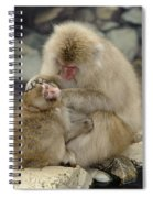 Snow Monkeys Spiral Notebook