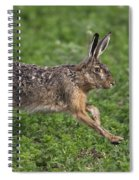 110202p213 Spiral Notebook