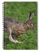 110202p214 Spiral Notebook