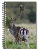 110221p138 Spiral Notebook