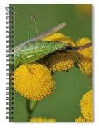 110221p245 Spiral Notebook