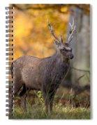 110307p069 Spiral Notebook