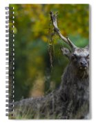 110307p070 Spiral Notebook