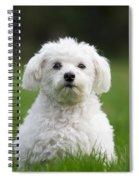 110506p113 Spiral Notebook