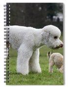 110506p119 Spiral Notebook