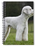 110506p121 Spiral Notebook