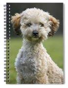 110506p124 Spiral Notebook