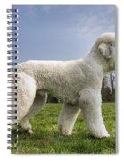 110506p134 Spiral Notebook