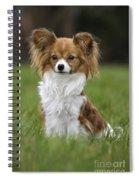 110506p146 Spiral Notebook