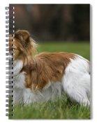 110506p148 Spiral Notebook