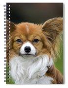 110506p149 Spiral Notebook