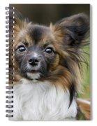 110506p151 Spiral Notebook