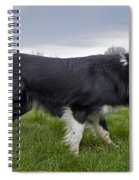 110506p164 Spiral Notebook