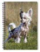 110506p174 Spiral Notebook