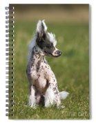 110506p176 Spiral Notebook