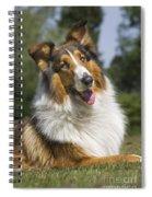 110506p178 Spiral Notebook